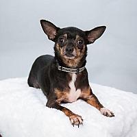 Adopt A Pet :: Virginia - St. Louis Park, MN