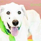 Adopt A Pet :: PEANUT BUTTER