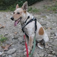 Adopt A Pet :: 36554512 - Paso Robles, CA