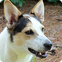Adopt A Pet :: Shelley - Thomasville, NC