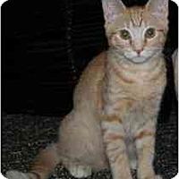 Adopt A Pet :: Smiley - Marietta, GA