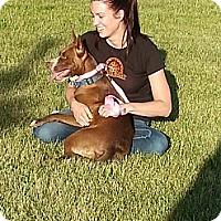 Adopt A Pet :: Robin - Calgary, AB