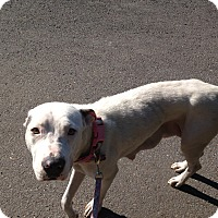 Adopt A Pet :: Secret - Garwood, NJ