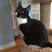 Adopt A Pet :: Pepper - Devon, PA