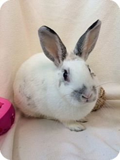 English Spot for adoption in Paramount, California - Leticia
