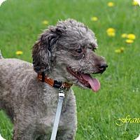 Adopt A Pet :: Frankie - Troy, MI