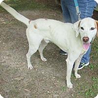 Adopt A Pet :: Belverdere - Warrenton, NC
