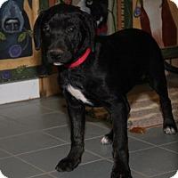 Adopt A Pet :: Gr Litter - Zeda - Livonia, MI