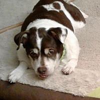 Adopt A Pet :: Shirley - Columbus, OH