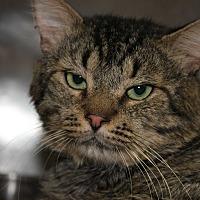 Adopt A Pet :: PAULEY - Clayton, NJ