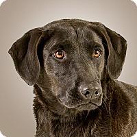 Adopt A Pet :: Louise - Prescott, AZ