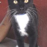 Adopt A Pet :: JAY - St. Thomas, VI