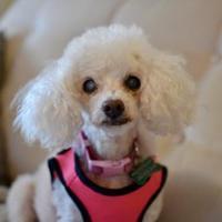 Adopt A Pet :: Sansa - San Francisco, CA