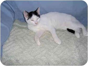 Domestic Shorthair Kitten for adoption in Cairo, Georgia - Batman