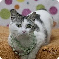 Adopt A Pet :: Suzie - Raleigh, NC
