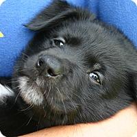 Adopt A Pet :: George - Danbury, CT
