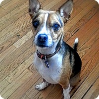 Adopt A Pet :: Captain *ADOPTED!* - Chicago, IL