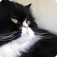 Adopt A Pet :: Tucson - Columbus, OH