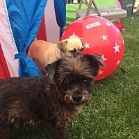 Adopt A Pet :: Tella Tubby - Vacaville, CA