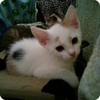 Adopt A Pet :: Veronica (new) - Tampa, FL