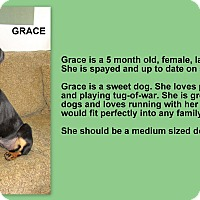 Adopt A Pet :: Grace 1 in CT - East Hartford, CT