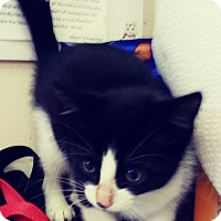 Adopt A Pet :: Delphi - Trevose, PA