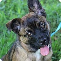 Adopt A Pet :: Stella - MEET ME @ PETCO 7.1.17! - Nanuet, NY