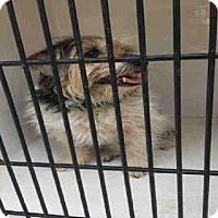 Adopt A Pet :: LILY - Louisville, KY