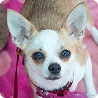 Adopt A Pet :: Abby - San Marcos, CA