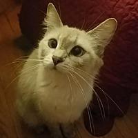 Adopt A Pet :: Sindel - Brownsboro, AL