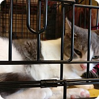 Adopt A Pet :: Cohen - Avon, OH