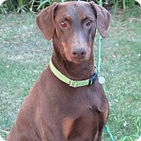 Adopt A Pet :: Robin - Tracy, CA
