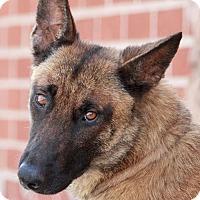 Adopt A Pet :: Irie von Ingeleben - Los Angeles, CA