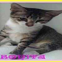 Adopt A Pet :: BONITA - Fort Walton Beach, FL