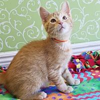 Adopt A Pet :: Morris - Red Wing, MN