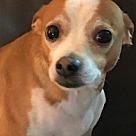 Adopt A Pet :: Ollie