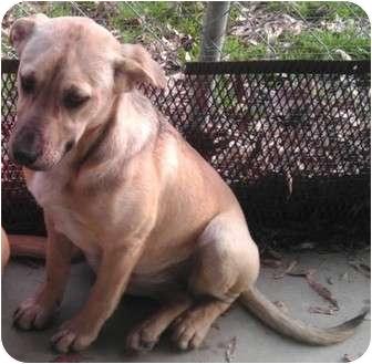 Shepherd (Unknown Type) Mix Dog for adoption in Parkton, North Carolina - Brendy
