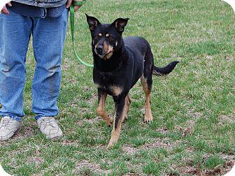 German Shepherd Dog Mix Dog for adoption in North Judson, Indiana - Angel