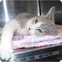 Adopt A Pet :: Molly - Modesto, CA