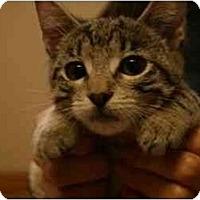 Adopt A Pet :: Aye-Aye - Davis, CA