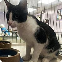 Adopt A Pet :: Yang - Chandler, AZ