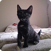 Adopt A Pet :: Kaybee - Chandler, AZ