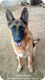 German Shepherd Dog/German Shepherd Dog Mix Dog for adoption in Portland, Oregon - Zuko