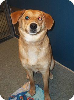 Labrador Retriever/Catahoula Leopard Dog Mix Dog for adoption in Warrenton, North Carolina - Charlie
