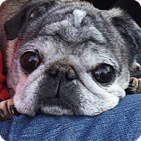 Adopt A Pet :: Oscar - Troy, MI