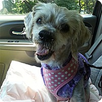 Adopt A Pet :: Masterson - Spring City, TN