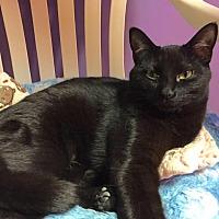 Adopt A Pet :: Jin Jin - Topeka, KS