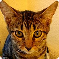 Adopt A Pet :: Dougey - Winchester, CA