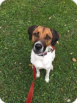 Hound (Unknown Type) Mix Dog for adoption in Nesquehoning, Pennsylvania - Jasper
