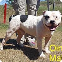 Adopt A Pet :: Oink - Waycross, GA
